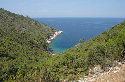 Forest on Thasos
